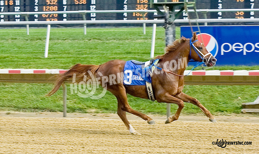 Quick and Rich winning The Bob Magness Memorial Arabian Derby (gr 2) at Delaware Park on 9/1/14