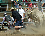 Bullfighter Kenny Books makes a save during action at the Southeast Weld County CPRA Rodeo on August 12, 2006.