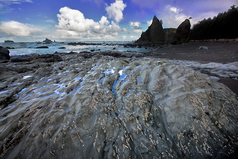 barnacles on rock at Rialto Beach. Olympic National Park, Washington