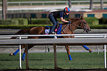 OCT 26 2014:Rainha Da Bateria, trained by Graham Motion, exercises in preparation for the Breeders' Cup Juvenile Fillies Turf at Santa Anita Race Course in Arcadia, California on October 26, 2014. Kazushi Ishida/ESW/CSM