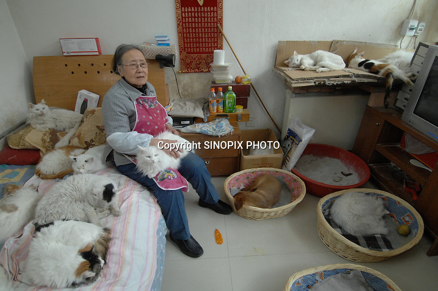 Ding Shi Rong, 80, with some of the 250 (two hundred and fifty) cats that she keeps in her walled Hutong home.  <br />Ding Shi Rong's home acts as a shelter for abandanded cats, which are being collected from the streets and taken to Government compounds where they slowly die.