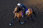 November 3, 2020: Dunbar Road, trained by trainer Chad C. Brown, exercises in preparation for the Breeders' Cup Distaff at Keeneland Racetrack in Lexington, Kentucky on November 3, 2020. John Voorhees/Eclipse Sportswire/Breeders Cup/CSM