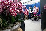 Foto: VidiPhoto<br /> <br /> NIEUWAAL – Een exporteur krijgt dinsdag uitleg van Wilco Verhoeven (groen shirt) van orchideeënkwekerij Artisan in Nieuwaal in de Bommelerwaard. Artisan is één van de elf Nederlandse orchideeënkwekers die meedoet aan de zogenoemde Orchid Inspiration Days. De phaleanopsiskwekers tonen dan aan de groothandel de nieuwste soorten en trends. Het is voor het eerst in twee jaar dat de kwekers weer hun deuren openen. Vorig jaar kon het evenement niet doorgaan vanwege de lockdown. De belangstelling voor de Orchid Inspiration Days bij Artisan is tweemaal zo groot als verwacht, aldus Verhoeven.