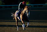 November 3, 2020: Chaos Theory, trained by trainer John W. Sadler, exercises in preparation for the Breeders' Cup Turf Sprint at Keeneland Racetrack in Lexington, Kentucky on November 3, 2020. Jon Durr/Eclipse Sportswire/Breeders Cup