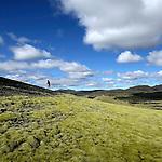 Mousses vert bronze de l Eldhraun.Les laves se couvrent d un epais tapis de mousses (Rhacomitrium) vert bronze. Au fil du temps, le feu petrifie de la lave s est transforme grace au vent deposant des particules minerales en une couche vegettale ondoyante sous le soleil. .