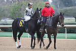 HOT SPRINGS, AR - March 11: It Tiz Well, #6, ridden by Corey Nakatani in the post parade prior to the Honeybee Stakes at Oaklawn Park on March 11, 2017 in Hot Springs, AR. (Photo by Ciara Bowen/Eclipse Sportswire/Getty Images)