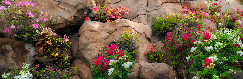 Flower lined rock wall at the Hilton Hawaii, the big island.