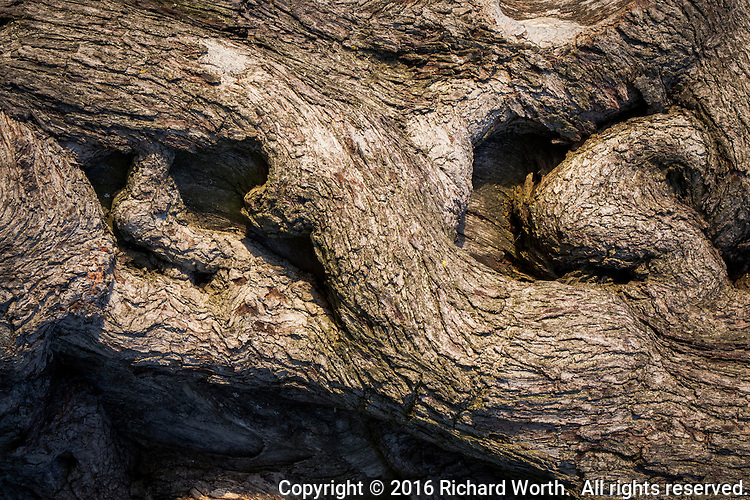 The patterns imply, suggest, create a sense of motion on a tree trunk in an urban park.