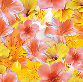 Isabella, FLOWERS, BLUMEN, FLORES, paintings+++++,ITKE026506-GN1507-,#f#, EVERYDAY ,napkin,napkins
