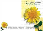Alfredo, FLOWERS, photos, BRTOLP15272,#F# Blumen, flores