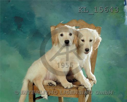 Interlitho, Alberto, ANIMALS, dogs, photos, 2 dogs, chair(KL15643,#A#) Hunde, perros