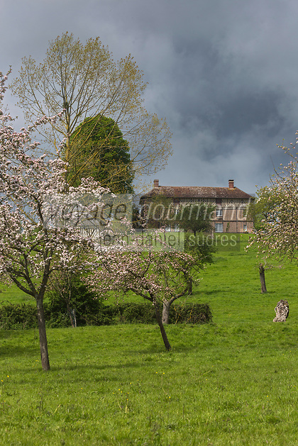 France, Orne (61), Pays d'Auge, Camembert, Manoir de Beaumoncel et  Pommiers en fleurs // France, Orne, Pays d'Auge, Camembert, Beaumoncel Manor and flowering apple trees