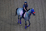 September 1, 2020: Dream Marie exercises as horses prepare for the 2020 Kentucky Derby and Kentucky Oaks at Churchill Downs in Louisville, Kentucky. The race is being run without fans due to the coronavirus pandemic that has gripped the world and nation for much of the year. John Voorhees/Eclipse Sportswire/CSM