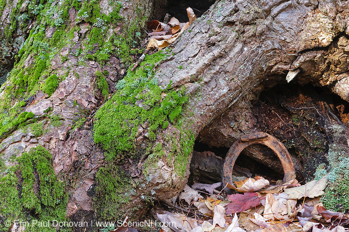 Horseshoe, a protected artifact, from the Swift River Railroad logging era in the Oliverian Brook valley just below Square Ledge in Albany, New Hampshire. This horseshoe is considered to be an artifact. And the removal of historical artifacts from federal lands without a permit is a violation of federal law.