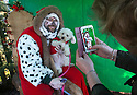 """18/12/16<br /> <br /> Miniature Poodles Pickle is photographed by owner Rebecca Goddard.<br /> <br /> Close to 800 dogs, many of them dressed up in festive garb, have visited their very own Santa Paws in a special dog-only Christmas grotto held in Sherwood Forest in Nottinghamshire this weekend.<br /> The two-day event, which was organised by park rangers working for Nottinghamshire County Council, has been running for three years.<br /> Ranger Graeme Turner, who originally came up with the idea for a doggy-themed Santa's Grotto said this year has been the best so far.<br /> """"The queue is huge, it snakes back all the way round the visitor's centre,"""" he said. """"All the dogs are being very well behaved, I guess they don't want to get onto Santa Paw's naughty list this close to Christmas!""""<br /> All canine visitors to the grotto got a special doggy bag full of treats and money raised from the event will go to Jerry Green Dog Rescue charity.<br /> <br /> All Rights Reserved F Stop Press Ltd. (0)1773 550665   www.fstoppress.com"""