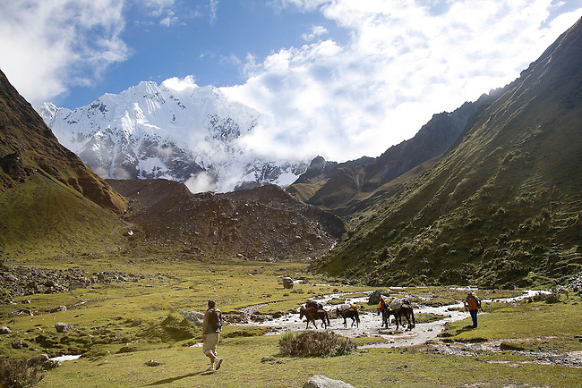 PACK HORSES MAKE THEIR WAY UP THE SALKANTAY PASS IN THE PERUVIAN ANDES