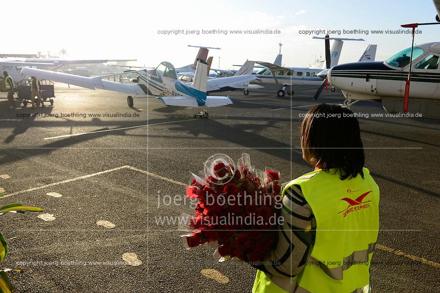 KENYA, Nairobi, Wilson airport, aircraft service employee Skyward express presents roses to passengers for Valentins Day