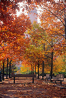 Fall Foliage Boston