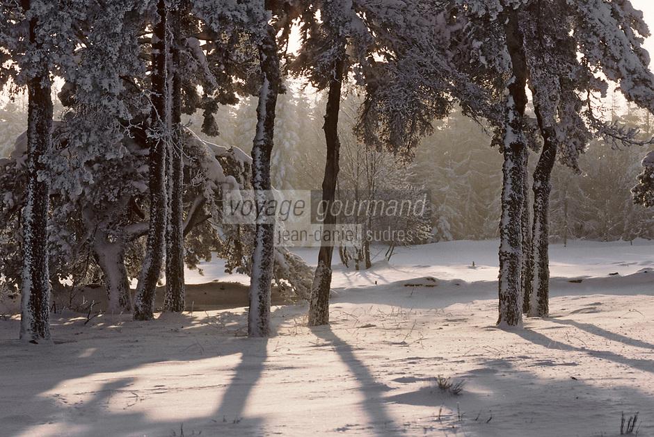Europe/France/Auvergne/43/Haute-Loire/Env. de Saint-Julien-Chapteuil: Forêt en hiver