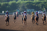 ARCADIA, CA - NOV 4: Tamarkuz #8 (left), ridden by Mike Smith, wins the Breeders' Cup Dirt Mile at Santa Anita Park on November 4, 2016 in Arcadia, California. (Photo by Kaz Ishida/Eclipse Sportswire/Breeders Cup)