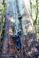 Image Ref: T68<br /> Location: Ada Tree Walk, Yarra Ranges<br /> Date: 16 July, 2016