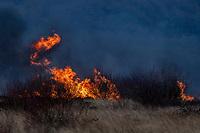 2021 02 11 Fire near Fairwood, Swansea, Wales, UK.