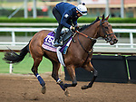 ARCADIA, CA - NOV 01: New Money Honey, owned by eFive Racing Thoroughbreds and trained by Chad C. Brown, exercises in preparation for the Breeders' Cup 14 Hands Winery Juvenile Fillies at Santa Anita Park on November 1, 2016 in Arcadia, California. (Photo by Kazushi Ishida/Eclipse Sportswire/Breeders Cup)
