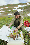 Bruce Bennett Preparing To Dry Collected Plants