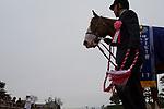 FUNABASHI,JAPAN-APRIL 01: Logi Chalice,ridden by Hiroyuki Uchida, after winning the Lord Derby Challenge Trophy at Nakayama Racecourse on April 01,2017 in Funabashi,Chiba,Japan (Photo by Kaz Ishida/Eclipse Sportswire/Getty Images)