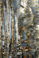 """ICICLES-5""<br />