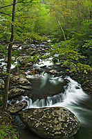 Spring rains along Middle Prong of Little River, Tremont