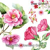 Isabella, FLOWERS, BLUMEN, FLORES, paintings+++++,ITKE029787,#f#, EVERYDAY