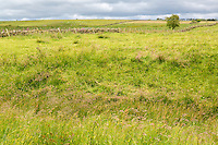 Cumbria, England, UK.  Remnants of Defensive Ditch on north side of Hadrian's Wall.