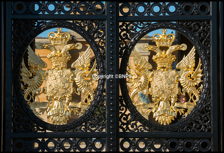 BNPS.co.uk (0102 558833)<br /> Pic: PhilYeomans/BNPS<br /> <br /> Dukes of Marlborough crest's.<br /> <br /> Golden Gates restored to their former glory.<br /> <br /> The majestic gates which guard the entrance to Blenheim Palace, Sir Winston Churchill's birthplace, have been given a golden makeover.<br /> <br /> The largest monumental entrance to a private palace in Britain, the massive 20 ft high, 17 tonne gates, installed in 1852, have been painstakingly restored using over 6,000 leaves of 24 carat gold.<br /> <br /> Gilder John Naysmith painstakingly stripped and re-painted the wrought iron and then applied 240 books of gold leaf to the Marlborough coat of arms and crest by hand.