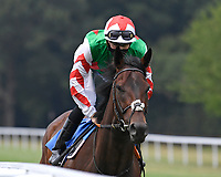 Absolute Altitude ridden by Hector Crouch goes down to the start of The Federation Of Bloodstock Agents Novice Stake s   during Horse Racing at Salisbury Racecourse on 13th August 2020