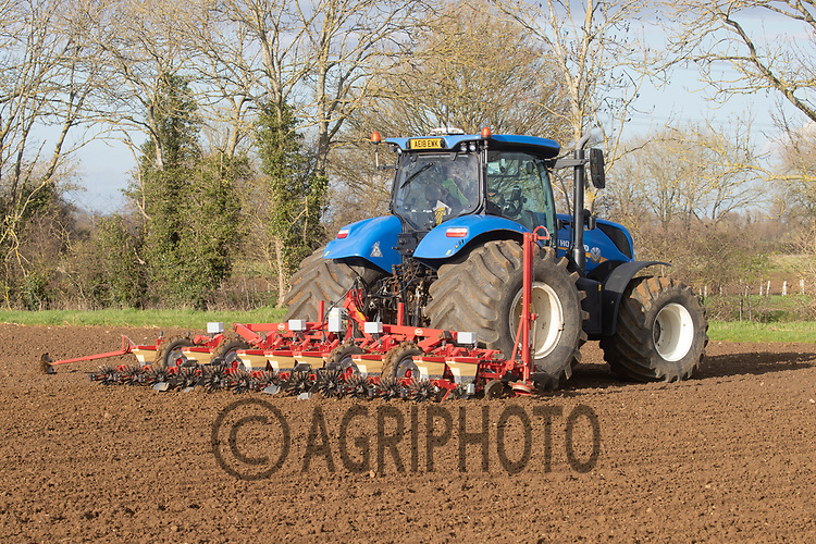25-3--2021 Drilling sugar beet in Lincolnshire <br /> ©Tim Scrivener Photographer 07850 303986<br />      ....Covering Agriculture In The UK....