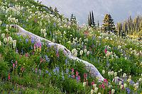 Wildflowers