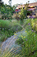 Gravel path to home through meadow garden with grasses and flowering perennials - Barbata garden, Walnut Creek, California