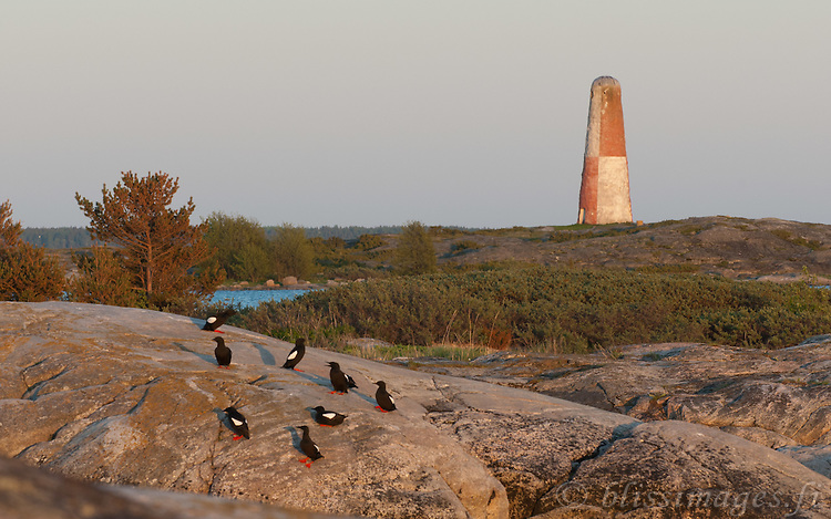 Lyökki is home to migrating seabirds such as the Black Guillemot. this stone day beacon is Finland's oldest built in 1757. It is located on Pookinmaa Island, in the Baltic Sea off the Southwest coast at Pyhämaa.