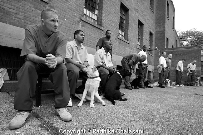 BEACON, NEW YORK-AUGUST 15:  Andy (L) and Roberto (2nd from L) listen to instructions from instructor Carl Rothe before leading their puppies through training exercises at Fishkill Correctional Facility. The puppies must learn 80 commands before they graduate from the program.