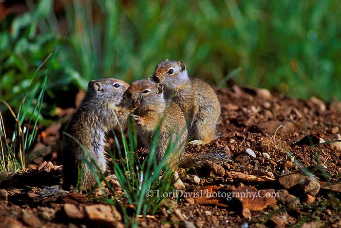 """""""Squirrels Telling Secrets""""   #W1"""