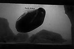 """Blob""<br /> Walrus Enclosure<br /> Coney Island Aquarium<br /> Coney Island, NY<br /> From the ""Captivity"" series<br /> © Thierry Gourjon-Bieltvedt"