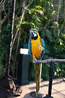 2021-10-07 Houston Zoo Asante Night at the Zoo
