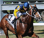 Richie's Sweetheart (no. 2), ridden by E.T. Baird and trained by Larry Rivelli, wins the grade 3 Turf Amazon Handicap for older mares on September 7, 2015 at Parx Racing in Bensalem (Sophie Shore/Eclipse Sportswire)