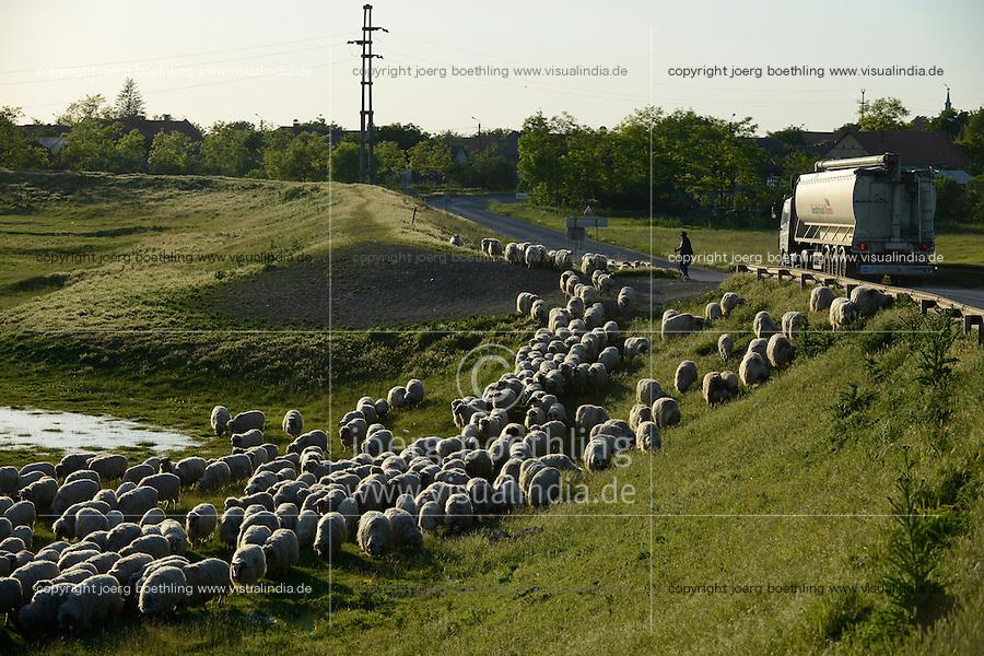 ROMANIA Banat, sheep herd / RUMAENIEN Banat, Schafherde