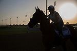MEYDAN,DUBAI-MARCH 24: Hoppertunity,trained by Bob Baffert,exercises in preparation for the Dubai World Cupat Meydan Racecourse on March 24,2016 in Meydan,Dubai (Photo by Kaz Ishida)