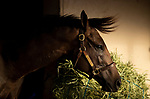 AUGUST 27, 2021: Flagstaff in his stall at Del Mar Fairgrounds in Del Mar, California on August 27, 2021. Evers/Eclipse Sportswire/CSM