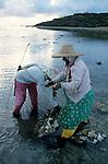 """Les poulpes ou """"ourites"""" font partie de l'alimentation ancestrale des Rodriguais. Tous les matins à marée basse, des dizaines de femmes vont pêcher les ourites..At low tide, women are going to catch octopus (ourites)"""