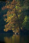 DEU, Deutschland, Bayern, Niederbayern, Naturpark Bayerischer Wald, bei Tittling: Dreiburgensee (Rothausee), Erolungsgebiet, Badesee   DEU, Germany, Bavaria, Lower-Bavaria, Nature Park Bavarian Forest, near Tittling: Dreiburgen Lake