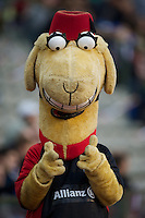 20121020 Copyright onEdition 2012©.Free for editorial use image, please credit: onEdition..The Saracens mascot, Sarrie the camel, during the Heineken Cup Round 2 match between Saracens and Racing Metro 92 at the King Baudouin Stadium, Brussels on Saturday 20th October 2012 (Photo by Rob Munro)..For press contacts contact: Sam Feasey at brandRapport on M: +44 (0)7717 757114 E: SFeasey@brand-rapport.com..If you require a higher resolution image or you have any other onEdition photographic enquiries, please contact onEdition on 0845 900 2 900 or email info@onEdition.com.This image is copyright the onEdition 2012©..This image has been supplied by onEdition and must be credited onEdition. The author is asserting his full Moral rights in relation to the publication of this image. Rights for onward transmission of any image or file is not granted or implied. Changing or deleting Copyright information is illegal as specified in the Copyright, Design and Patents Act 1988. If you are in any way unsure of your right to publish this image please contact onEdition on 0845 900 2 900 or email info@onEdition.com